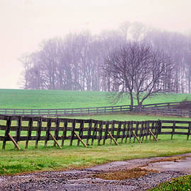 Foggy Morning in Chester County by Susan Maxwell Schmidt