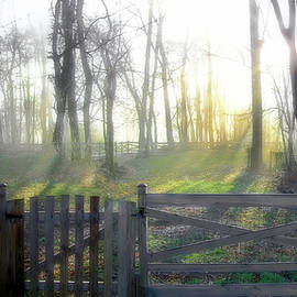 Foggy Morning Sunrise - Color by Brian Wallace