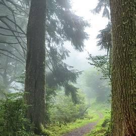 Foggy Trail by Beautiful Oregon