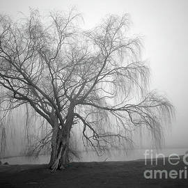Foggy Willow by Steve Gass