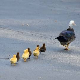 Following the Leader by Richard Bryce and Family