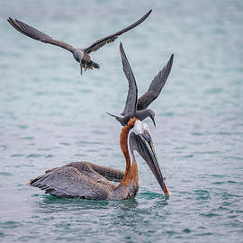 Food Fight in the Galapagos by Joan Carroll