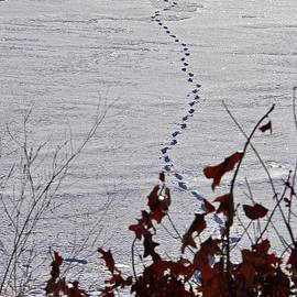Footprints in the Snow by Ann Brown