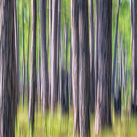 Forest Abstract - Pines of the Croatan National Forest by Bob Decker
