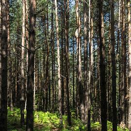 Forest Bathing - Walking Among Slim Pine Trees and Verdant Ferns by Georgia Mizuleva