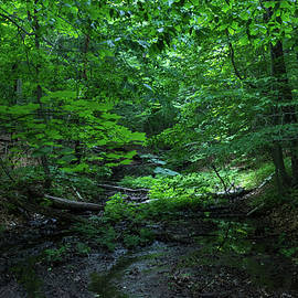 Forest Bathing - Wooded Glen for a Healing Immersion in Nature by Georgia Mizuleva