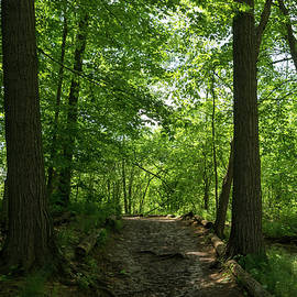 Forest Bathing - Woodland Path for a Healing Immersion in Nature by Georgia Mizuleva