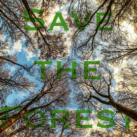Forest from the ground in sunset. Written  by Rick Neves