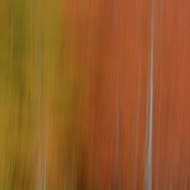Forest Illusions-Shades of Autumn by Whispering Peaks Photography