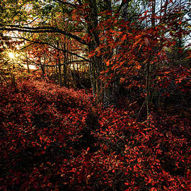 Forest In Autumn Color by Marty Saccone