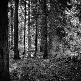 Forest by Irene Moriarty