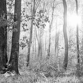 Forest Lanscape by Dane Walker