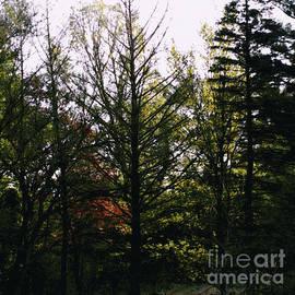 Forest Morning Light Impressionism by Frank J Casella