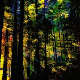 Forest of Redwoods by Christina Ford