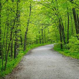 Forest Road by Susan Rydberg