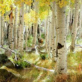 Forest Spirit by Donna Kennedy