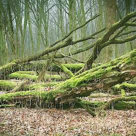 Forest Tale #46 by Slawek Aniol