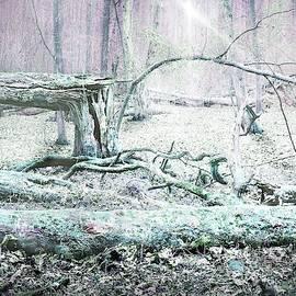 Forest Tale #50 by Slawek Aniol