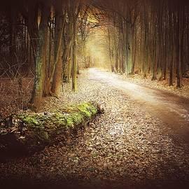 Forest Tale #54 by Slawek Aniol