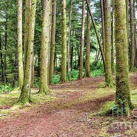 Forest Trail by Beautiful Oregon