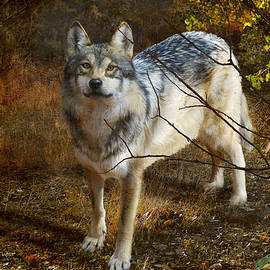 Forest Wolf by R christopher Vest