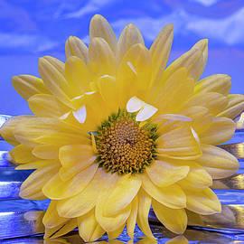 Forked Daisy by Arlene Krassner