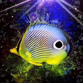 Foureye Butterflyfish  by Scott Wallace Digital Designs