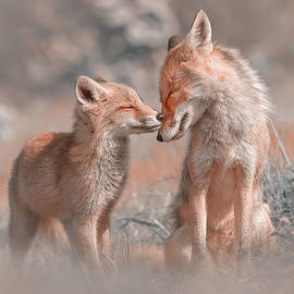 Fox Felicity - Mother and fox kit showing love and affection by Roeselien Raimond