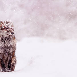Fox in the Snow Series - Red Fox enjoying a Snow Storm by Roeselien Raimond