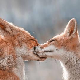 Fox Love Series - Foxy Love by Roeselien Raimond