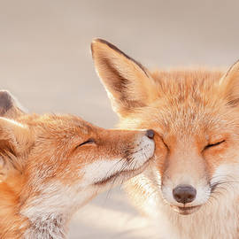 Fox Love Series - Happy Valentine's Day by Roeselien Raimond