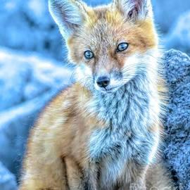 Foxy Kit by Jennifer Jenson