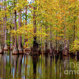 Francis Marion National Forest by Norma Brandsberg