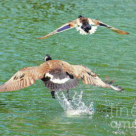 Freedom Flight by Atiqur Rahman