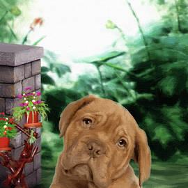 French Mastiff Puppy - DWP1356242 by Dean Wittle