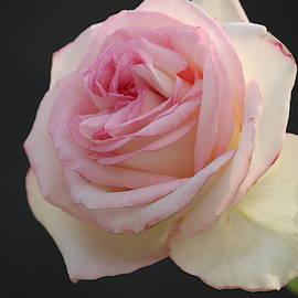 Fresh pink by Nilu Mishra