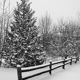 Fresh Snow on the Fence by David T Wilkinson