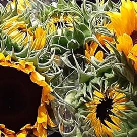 Fresh Sunflower Bouquets by Charlotte Gray