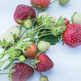 Fresh sweet strawberries by Claudia M Photography