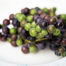 Fresh Wild Grapes by Alana Ranney