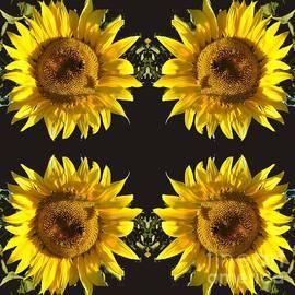 Friendship of Sunflowers by Leonida Arte