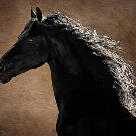 Friesian Portrait by Wes and Dotty Weber