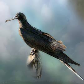Frigatebird by Richard Smith