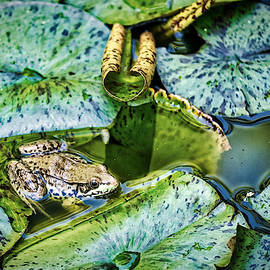 Frog and Lily Pads by Stuart Litoff