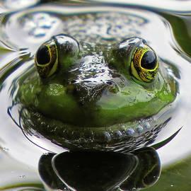Frog Kiss by Dianne Cowen