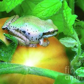 Frog on Tomato