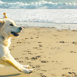 Frolicking Beach Buds pano by Christina Ford