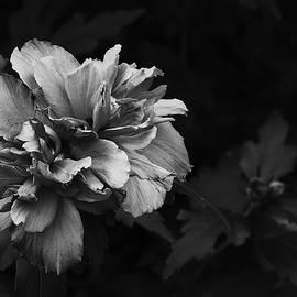 From Darkness To Light by Dennis Burton