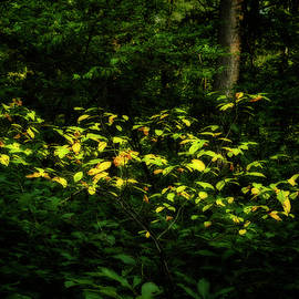 From Green To Gold by Denise Harty