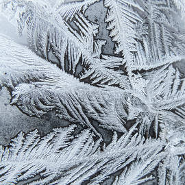 Frosted Window Pane In Winter by Deb Fedeler
